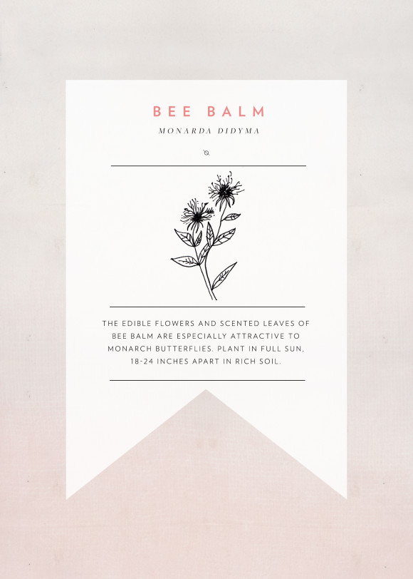 beebalm-seedpacket