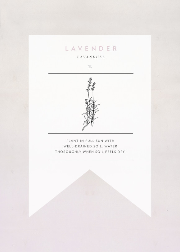 lavender-seedpacket