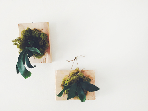 Post image for Weekend Do: Mount A Staghorn Fern