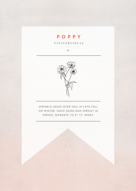 poppy-seedpacket