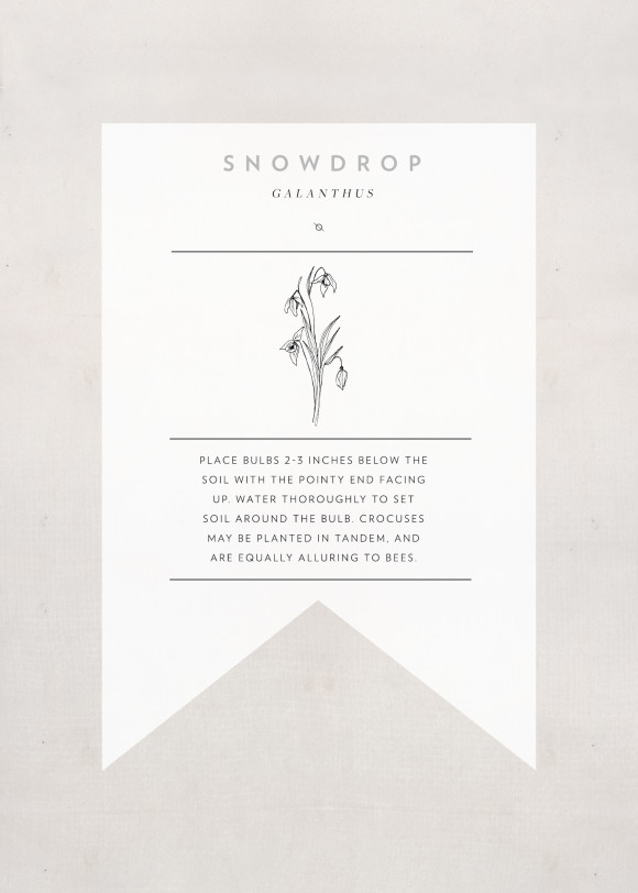snowdrop-seedpacket