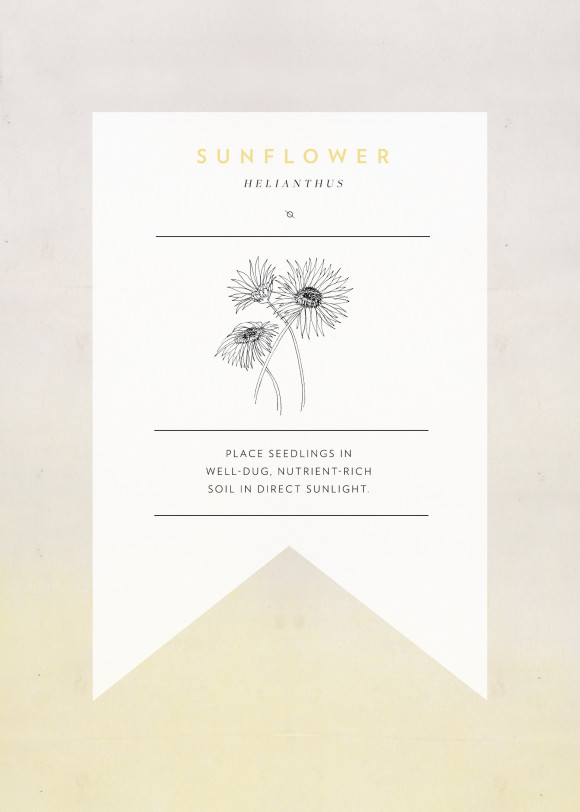 sunflower-seedpacket