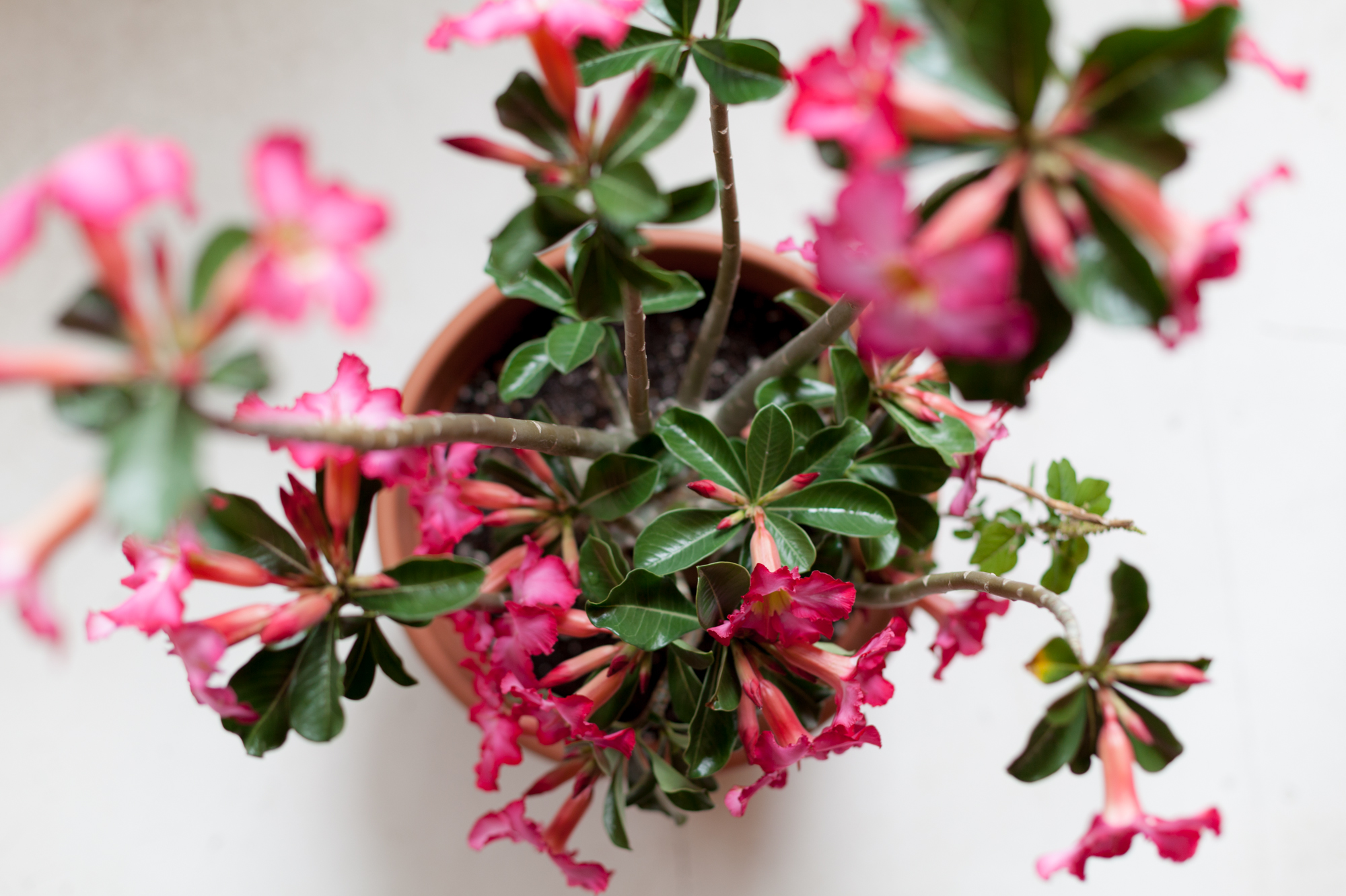 10 Great Indoor Plants To Keep You Company This Winter